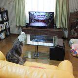 ネコとTV